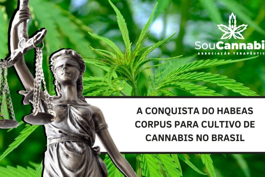 habeas corpus cannabis