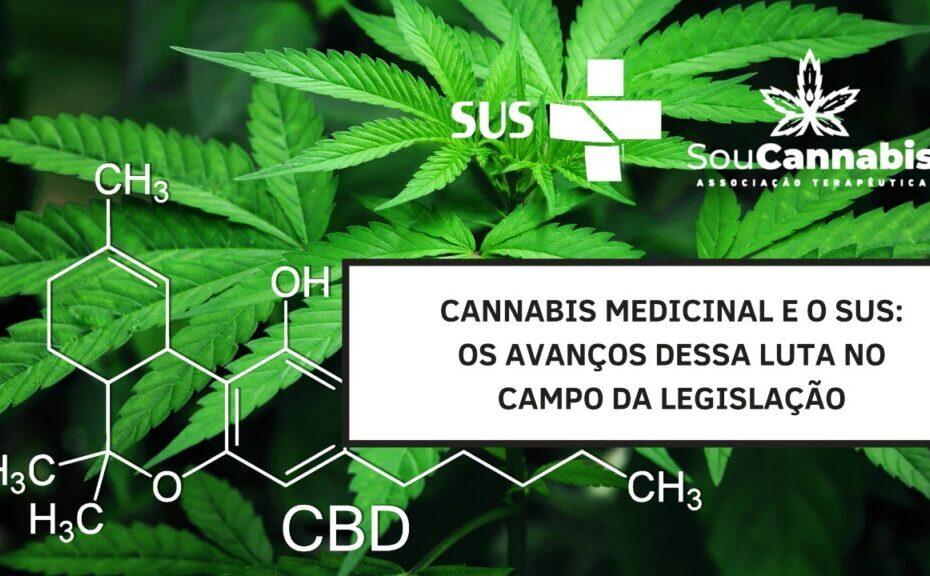 cannabis medicinal e acesso pelo sus